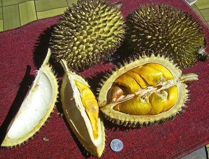 2011 05 25 durian