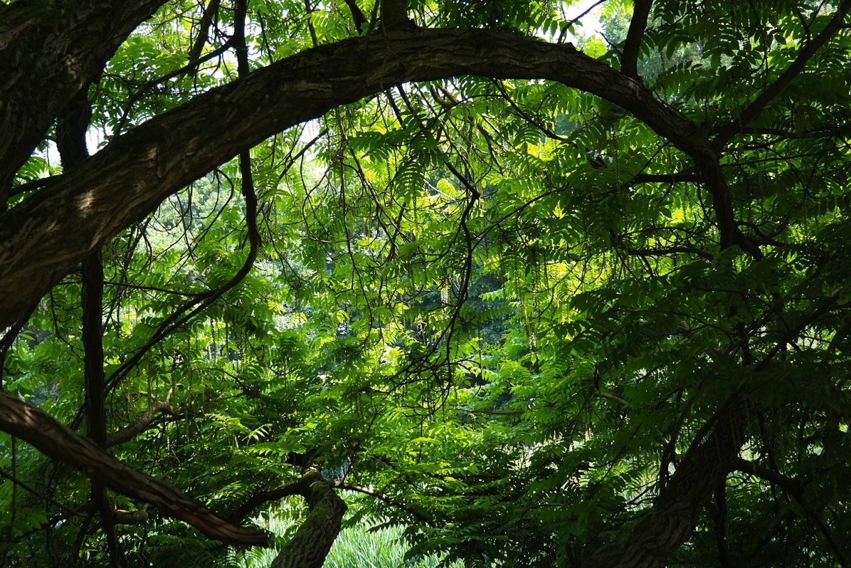 Tree 141692 1280