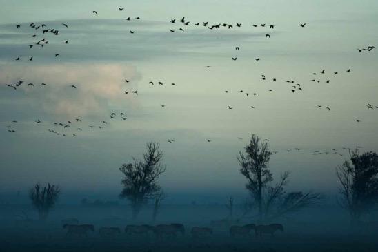 2019 03 27 birds sky
