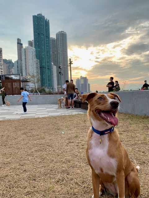 Ginger in Hong Kong
