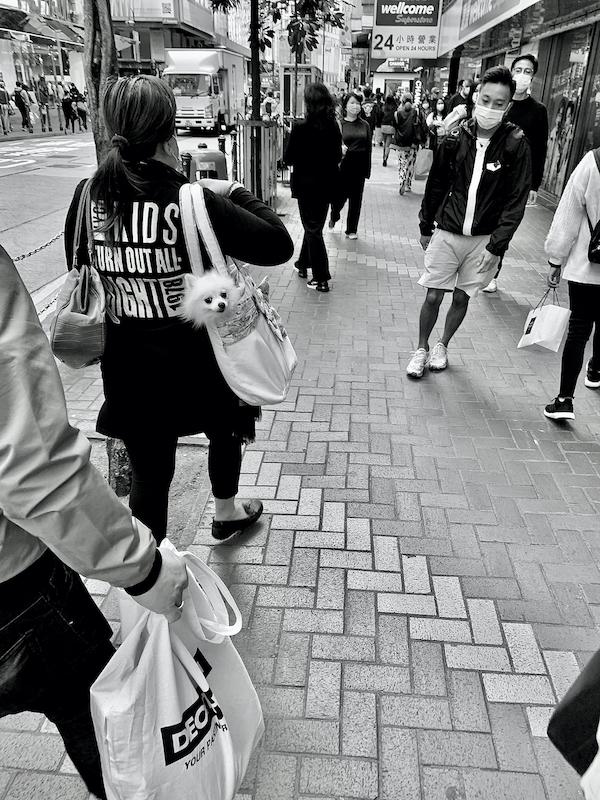 Dog in Causeway Bay